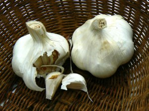 L'ail est parmi les plantes bienfaisantes les plus connues.